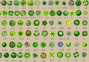 详细的psd格式的树种汇总图