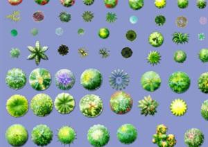 各类植物素材汇总PSD格式图