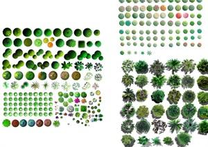 各类植物树种汇集素材psd格式图
