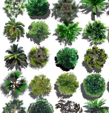 各类植物树种汇集素材psd格式图(3)