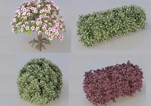 SU(草图大师)代理植物、绿篱、红叶石楠