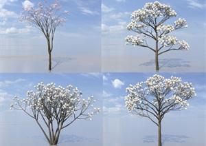 SU(草图大师)代理树、白玉兰代理