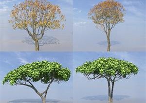 SU(草图大师)代理植物、梧桐树、枇杷树