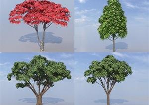 SU(草图大师)代理树、红枫、桂花树
