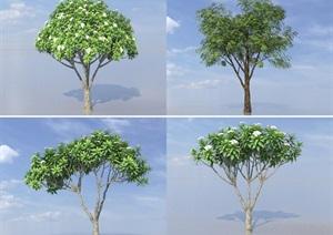 SU(草图大师)代理树、黄连木、鸡蛋花