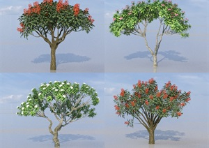 SU(草图大师)树代理、鸡蛋花、刺桐树