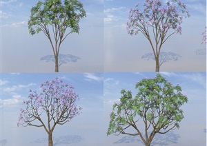 SU(草图大师)代理树、蓝花楹模型代理