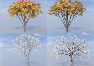 SU(草图大师)植物代理、三角枫、樱花