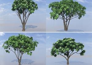 SU(草图大师)植物代理、山玉兰模型