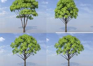 SU(草图大师)代理植物、香樟树模型