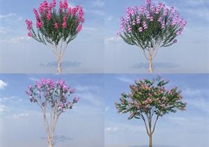 SU(草图大师)代理植物、紫薇树代理模型