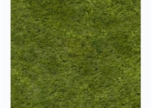 多种不同的详细草坪jpg贴图