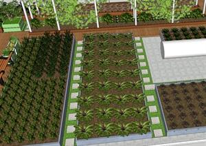 蔬菜模型、西红柿模型、小菜田