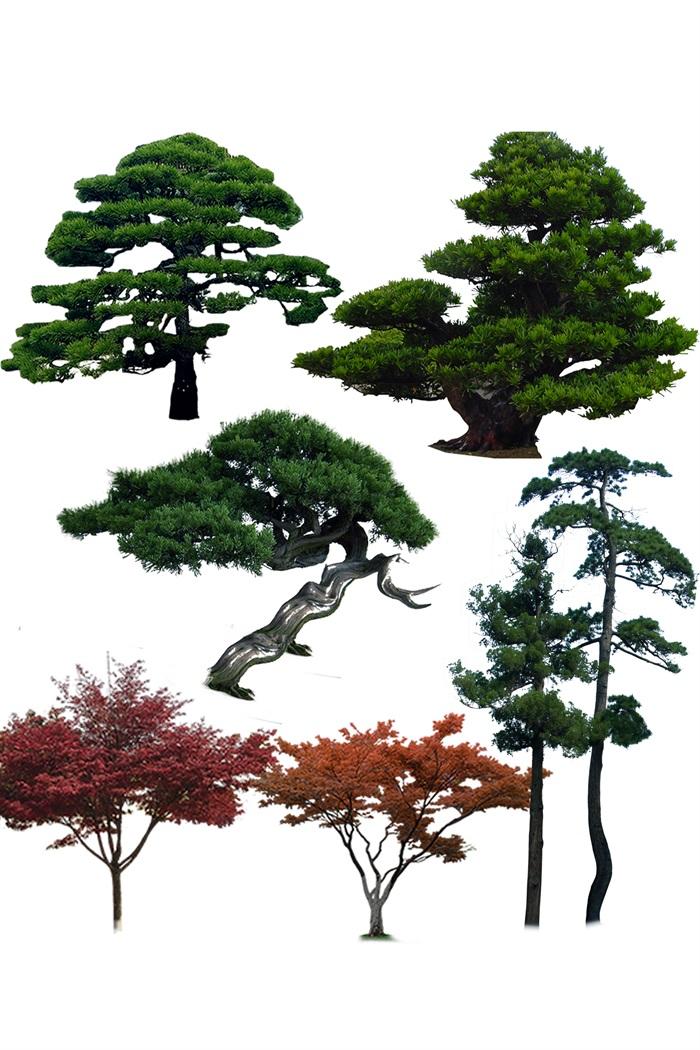 造型函数植物树红枫ps语言[绘制]用vb颜色如何原创素材素材图片