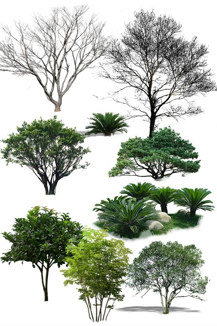 园林景观中各类植物ps素材(1)