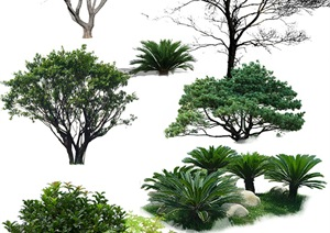 园林景观中各类植物ps素材