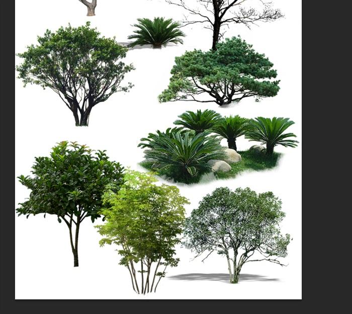 园林景观中各类植物ps素材(3)