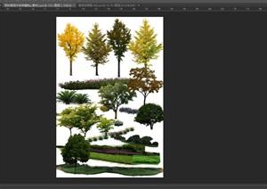 园林景观中各类植物ps素材2