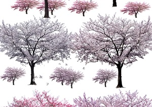 園林景觀中各類櫻花ps后期處理素材