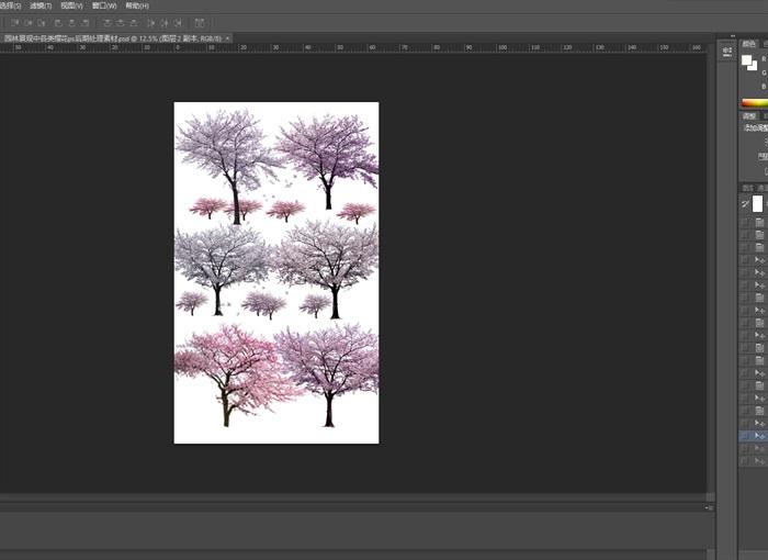 园林景观中各类樱花ps后期处理素材(3)