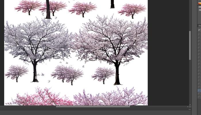 园林景观中各类樱花ps后期处理素材(4)