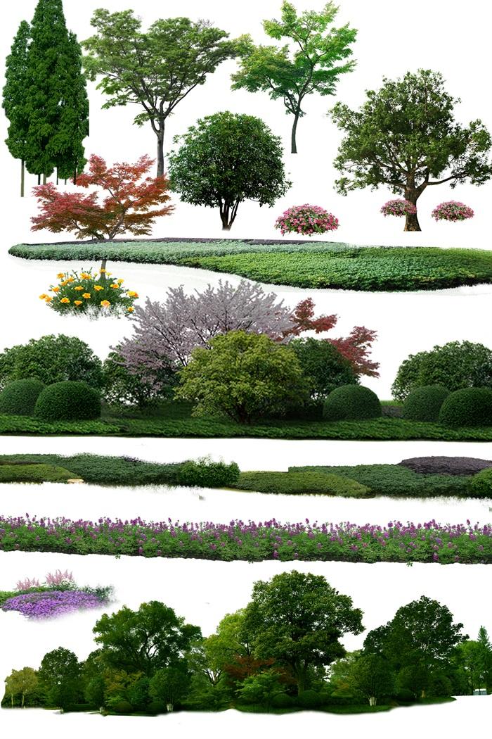 园林景观中乔木色块组景ps素材(4)