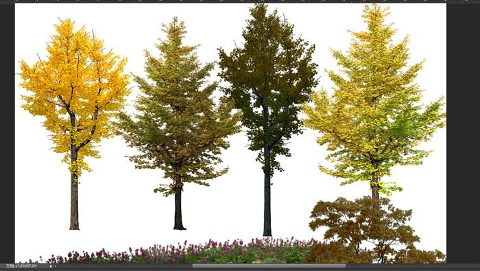 园林景观中各类植物ps素材2(2)