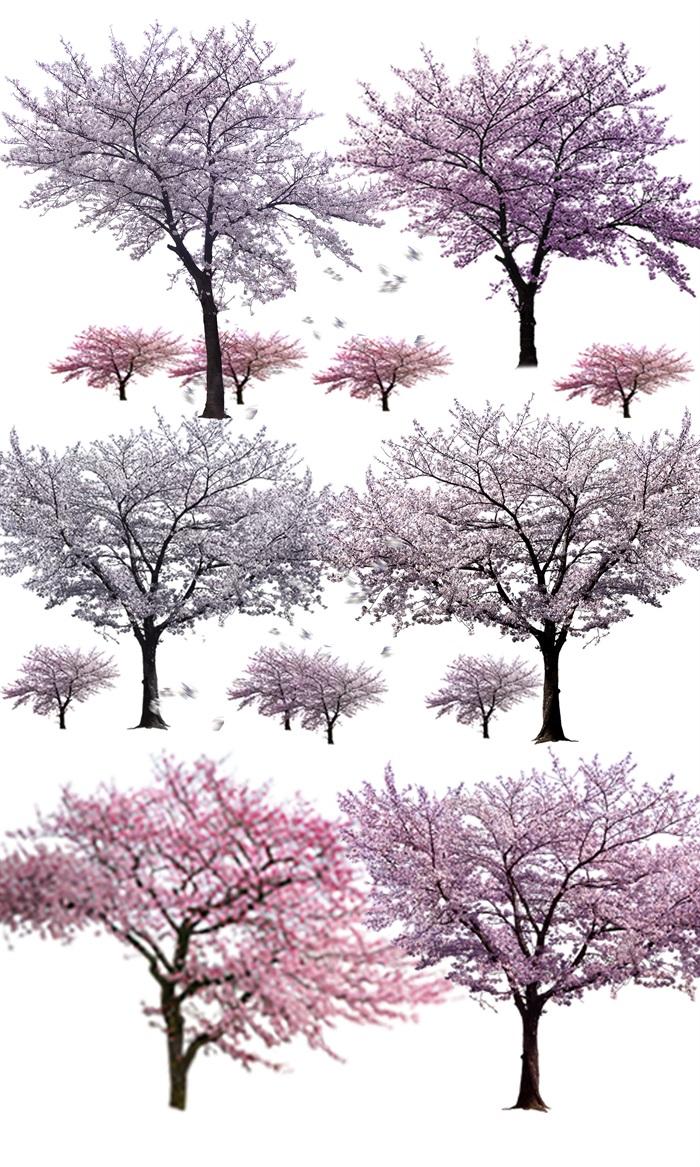 园林景观中各类樱花ps后期处理素材(1)
