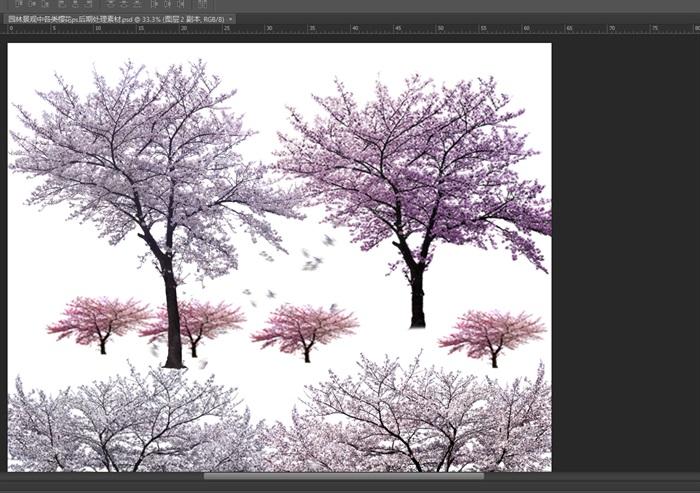 园林景观中各类樱花ps后期处理素材(2)