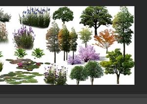 园林景观中植物花卉后期制作素材psd3