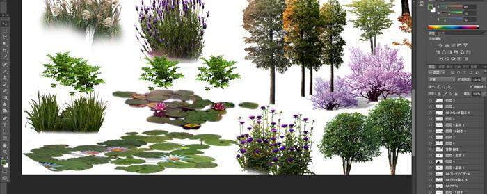 園林景觀中植物花卉后期制作素材psd3(3)