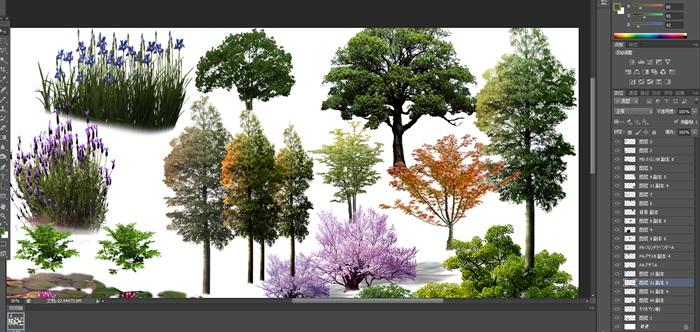 園林景觀中植物花卉后期制作素材psd3(5)