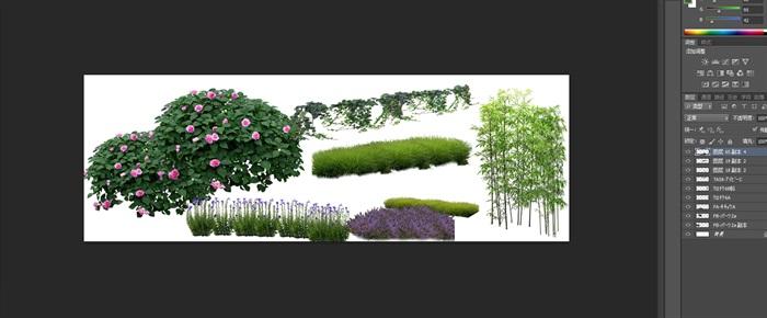 月季花卉竹子景觀后期制作素材psd(1)
