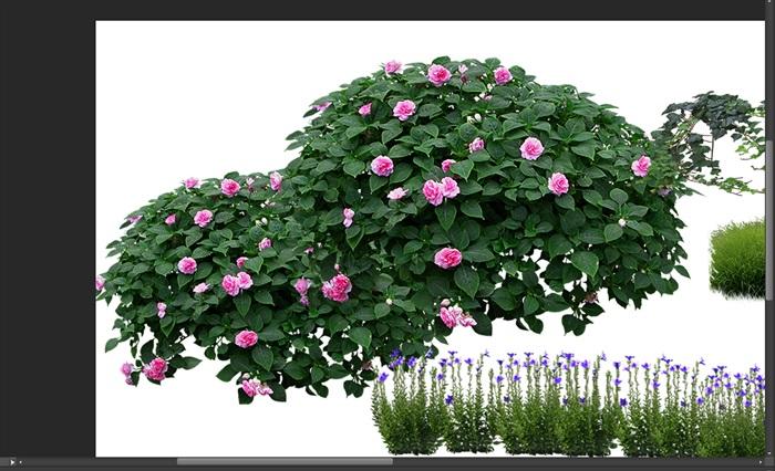月季花卉竹子景觀后期制作素材psd(2)