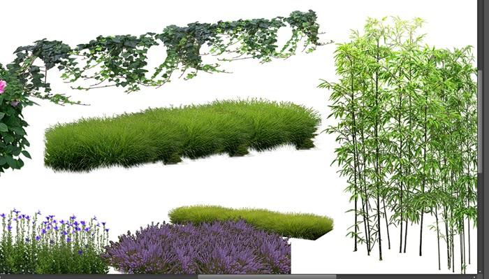 月季花卉竹子景觀后期制作素材psd(3)