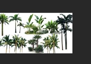 棕榈类植物后期园林制作素材psd