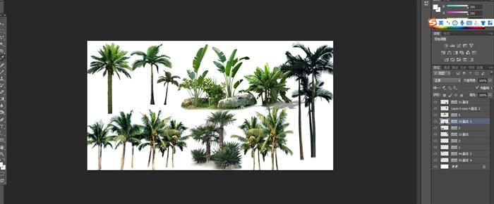 棕櫚類植物后期園林制作素材psd(1)