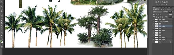 棕櫚類植物后期園林制作素材psd(3)