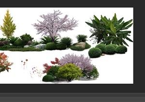 园林景观中植物后期制作素材psd4