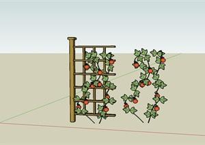 藤本植物西红柿架子菜园木架