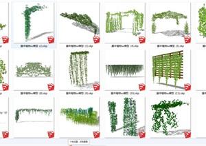 藤本植物sketchup模型别墅庭院花园植物3D共计31组