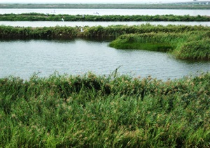 032 塘沽区黄港湿地生态公园总体概念规划方案--