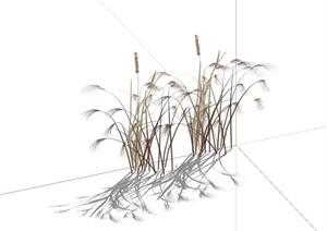 芦苇SU(草图大师)水生植物狗尾草景观小品