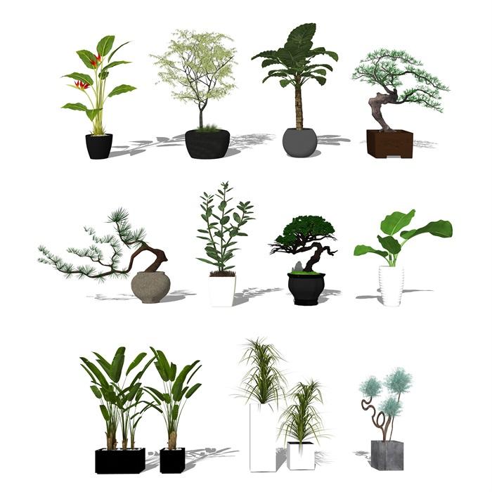 现代盆栽植物 景观小品su模型(2)