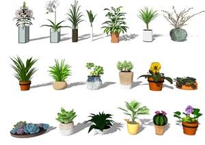 现代盆栽绿植植物多肉SU(草图大师)模型