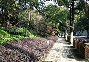 07上海方兴西区金茂府植物CAD施工图、实景图