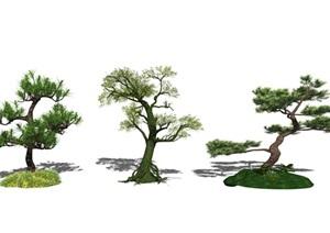 新中式景观树树木榕树树SU(草图大师)模型