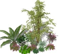 3D灌木植物组团  精品植物  SU(草图大师)植物