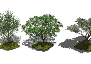 現代景觀樹植物喬木雞蛋花SU(草圖大師)模型
