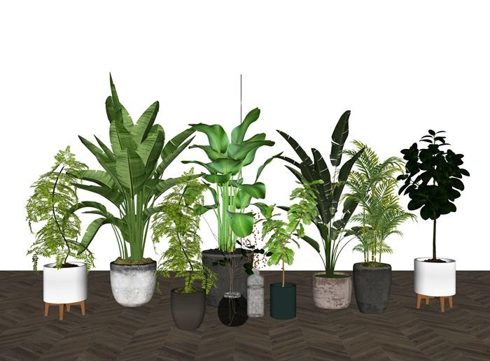 现代绿植盆栽 植物组合su模型(3)